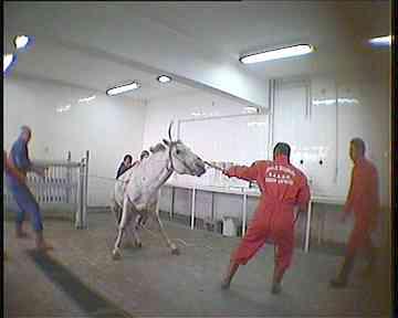 Tierversuche an Pferden 2.jpg