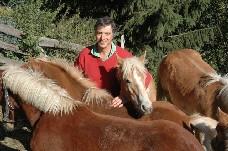 pferdemarkt-3.jpg