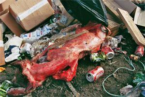 schlittenhunde-in-groenland-2.jpg