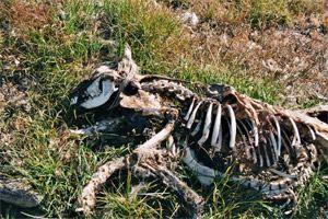 schlittenhunde-in-groenland-4.jpg