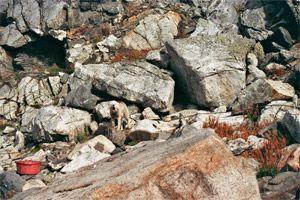 schlittenhunde-in-groenland-6.jpg