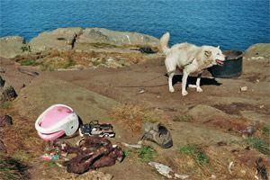 schlittenhunde-in-groenland-8.jpg