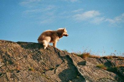 schlittenhunde-in-groenland-11.jpg