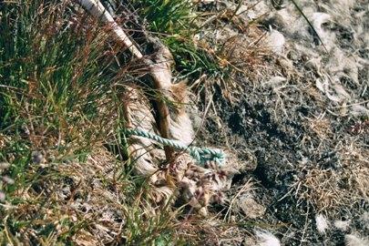 schlittenhunde-in-groenland-14.jpg