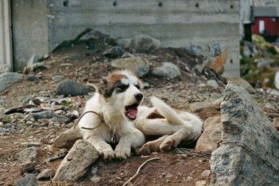 schlittenhunde-in-groenland-15.jpg