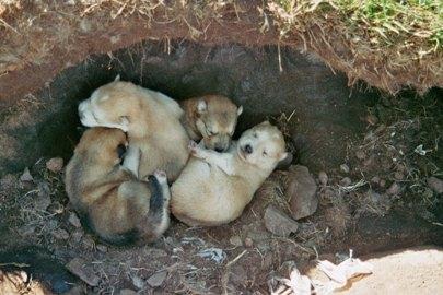 schlittenhunde-in-groenland-17.jpg