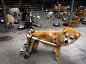 chinas-traurigste-hunde.jpg