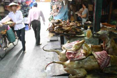 Comida China 00Hanoi-(Mercado-de-carne-de-perro)5b