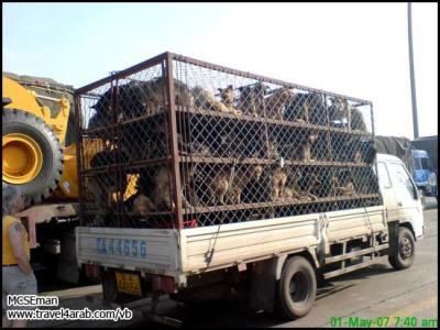 Comida China image002_1
