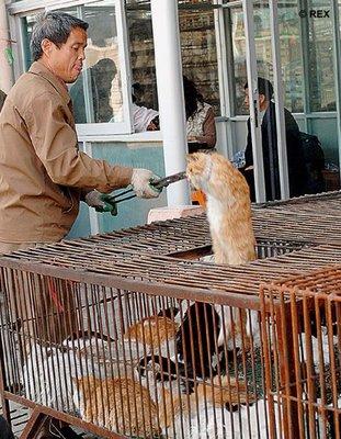 Comida China los_chinos_se_comen_a_los_gatos_y_a_los_perros