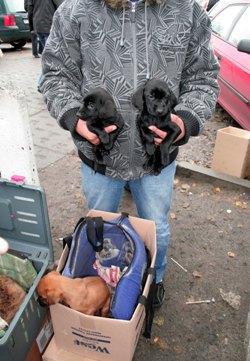 skrupelloser welpenhandel auf polenm rkten aktion tier warnt berliner hundefreunde dringend. Black Bedroom Furniture Sets. Home Design Ideas