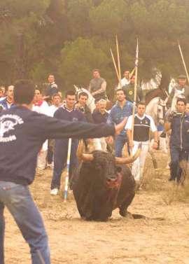 stiermord-von-tordesillas-16.jpg