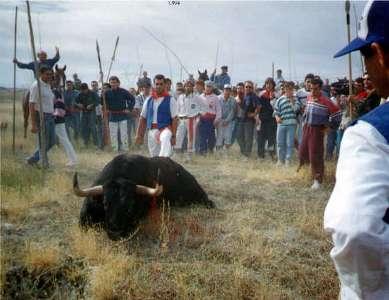 stiermord-von-tordesillas-17.jpg