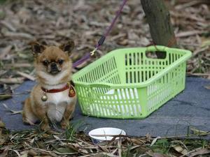 chinas-traurigste-hunde-2.jpg