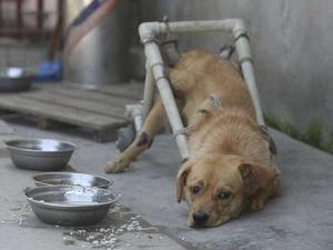 chinas-traurigste-hunde-3.jpg