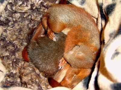 eichhoernchenbabys