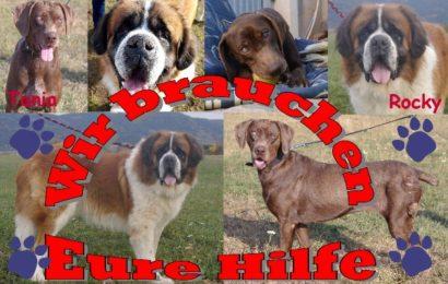 SPENDENAUFRUF des Tierheims Kronach – SOS! Tania, Rocky & Co brauchen Ihre Hilfe, um endlich wieder schmerzfrei leben zu können!