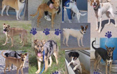 Bienvenidos en Alemania! Unsere neuen Spanier werden am 16.02.19 bei uns im Tierheim Kronach ankommen!