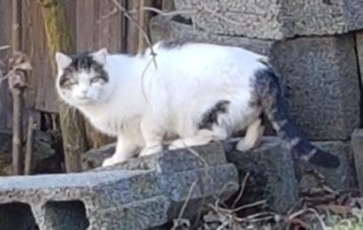 Wer kennt diese Katze???
