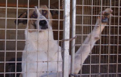 Hunde aus unserem spanischen Partner-Tierheim Albolote/Granada suchen ein neues Zuhause!