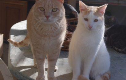 Katzen aus unserem spanischen Partner-Tierheim Albolote/Granada suchen ein neues Zuhause!