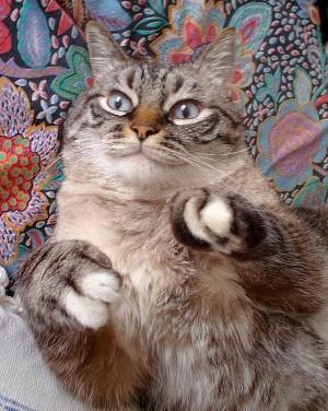 Katzen aus unserem spanischen Partner-Tierheim Sierra Nevada/Granada suchen ein neues Zuhause!