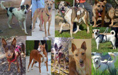 Zehn hoffnungsvolle Neuankömmlinge aus unserem spanischen Partner-Tierheim Albolote/Granada suchen eine neue Heimat in Deutschland!