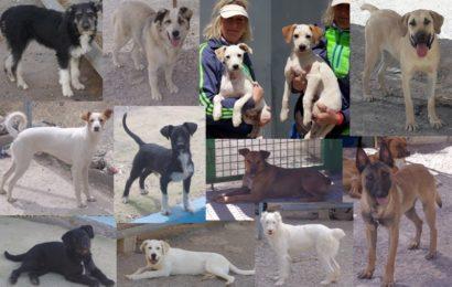 12 hoffnungsvolle Neuankömmlinge aus unserem spanischen Partner-Tierheim Sierra Nevada suchen eine neue Heimat in Deutschland!
