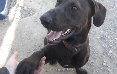 Hunde aus unserem spanischen Partner-Tierheim Sierra Nevada suchen liebevolle Familien!