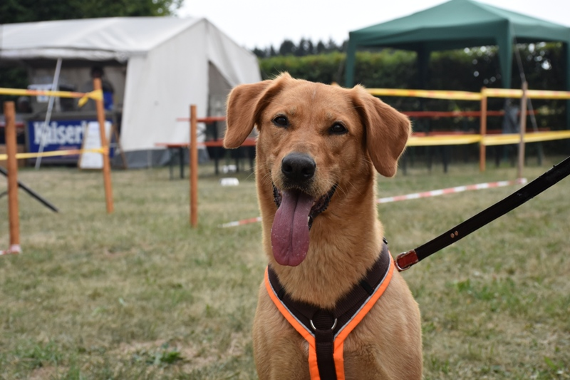 Unser Tierheimfest 2019 – DAS Event für alle großen und kleinen Tierfreunde war auch heuer wieder ein voller Erfolg!