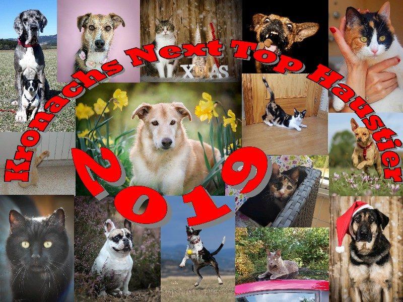 Tierheim Kronach proudly presents: Kronachs Next Top Haustier 2019!