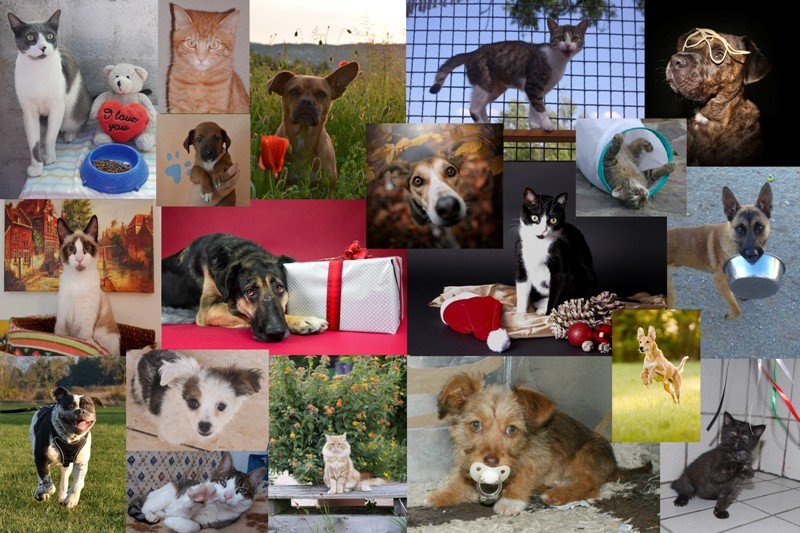 Der Original Tierheim-Kronach-Kalender 2020 – ein tierisches Weihnachtsgeschenk für tolle Tierfreunde!