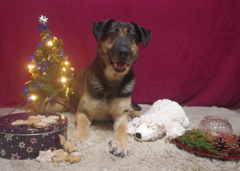 Weihnachten im Tierheim – Bitte vergesst uns nicht!