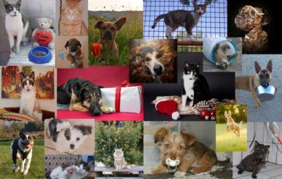 Wer hat noch nicht, wer will noch mal? Einige wenige Rest-Exemplare unseres Tierheim-Kronach-Kalenders 2020 suchen noch eine neue Bleibe in einem tierfreundlichen Haushalt!