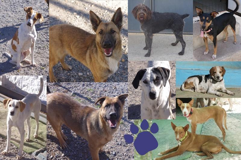 Herzlich willkommen! Am 22.02. sind zehn hoffnungsvolle Neuankömmlinge aus unserem spanischen Partner-Tierheim Sierra Nevada/Granada bei uns im Tierheim Kronach angekommen!