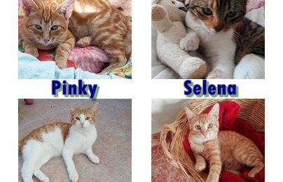 """""""Selena"""", """"Pinky"""", """"Pulgarcito"""" und """"Pitufo"""", drei Kater und ein Weibchen, kastriert, Hauskatzen, geb. 05/18, 08/18 und 05/19 aus einer Pflegestelle bei Bamberg"""