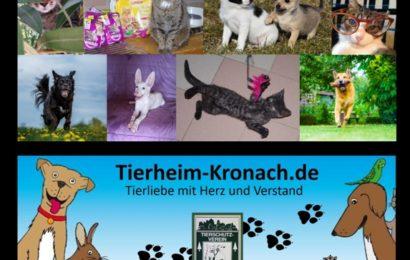 Der Original Tierheim-Kronach-Kalender 2021 – ein tierisches Weihnachtsgeschenk für alle Tierfreunde!