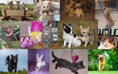 Wer hat noch nicht, wer will noch mal? Einige wenige Rest-Exemplare unseres Tierheim-Kronach-Kalenders 2021 suchen noch eine neue Bleibe in einem tierfreundlichen Haushalt!