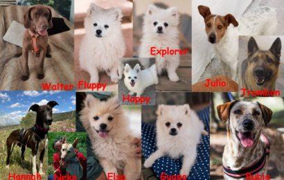 Vorankündigung! Am 12.06. werden wieder einmal 11 hoffnungsvolle Neuankömmlinge aus unseren beiden spanischen Partner-Tierheimen Albolote und Sierra Nevada bei uns im Tierheim Kronach ankommen!
