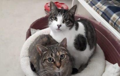 """""""Min"""" und """"Cleo"""", männlich und weiblich, beide kastriert, Hauskatzen, geb. 04/14 und 02/15, aus einer Pflegestelle bei Bamberg"""