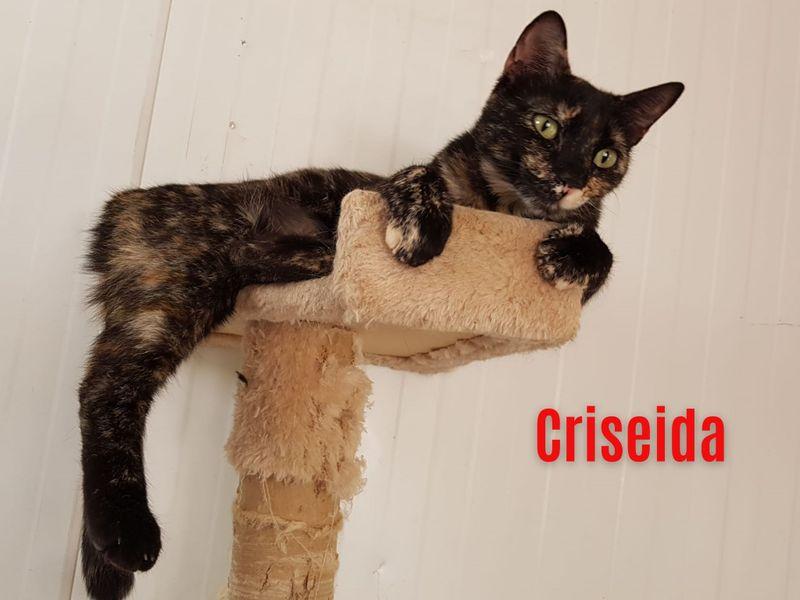 """""""Criséida"""", weiblich, kastriert, Hauskatze, geb. ca. 05/20, derzeit noch im Tierheim Sierra Nevada/Spanien"""
