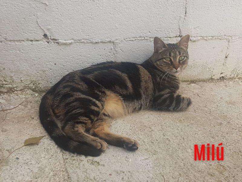 """""""Milú"""", männlich, kastriert, Hauskatze, geb. 05/20, derzeit noch im Tierheim Sierra Nevada/Spanien"""