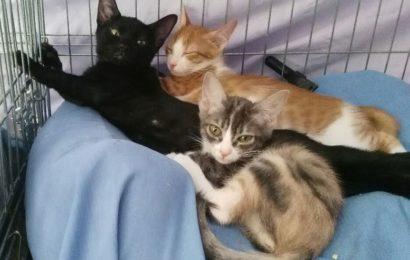 """""""Bob"""" und """"Batman"""", männlich, Hauskatzen, geb. 04/21, derzeit noch in Granada/Spanien"""