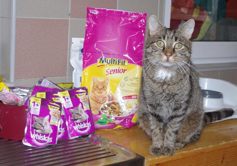 Naschkatzen auf der Suche nach Futterspenden