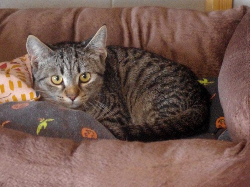 """""""Yedi, Yolanda und Yoyo"""", ein Kater, zwei Weibchen, alle kastriert, Hauskatzen, geb. 04/21"""