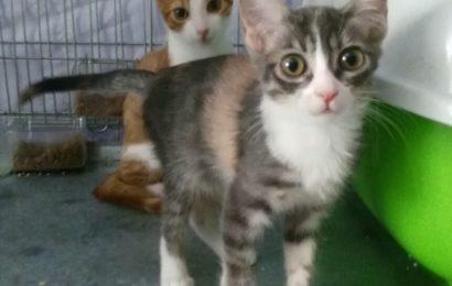 """""""Zoe"""" und """"Kitty"""", weiblich, Hauskatzen, geb. 04/21, derzeit noch in Granada/Spanien"""